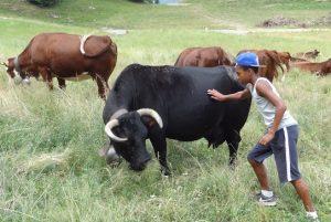 Jeune garçon dans un champ avec des vaches